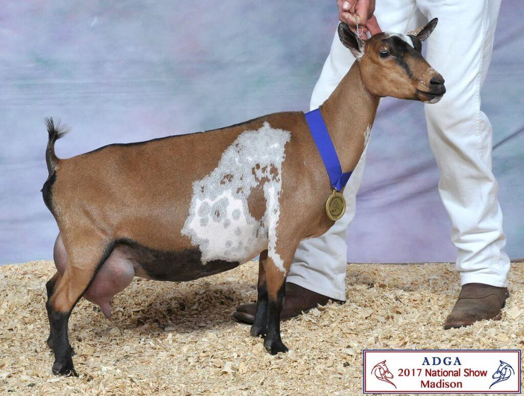American Dairy Goat Association - ADGA